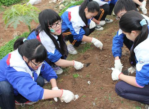 Việc học như trồng cây