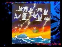 Bầy chim thiên nga
