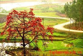cay gao - Viết một bài văn biểu cảm về loài cây em yêu