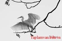 """Giới thiệu một vài nét về Chế Lan Viên, về xuất xứ, chủ đề bài thơ """"Con cò"""""""