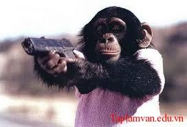 Tản mạn chuyện khỉ
