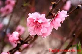 """Phân tích đoạn đầu bài thơ """"Mùa xuân nho nhỏ"""" của Thanh Hải"""