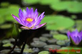 """Giới thiệu một vài nét về Thanh Hải, về xuất xứ và chủ đề bài thơ """"Mùa xuân nho nhỏ"""""""