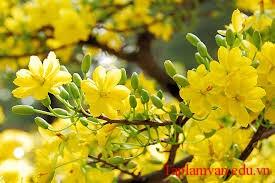 """Phân tích bài thơ """"Mùa xuân nho nhỏ"""" của Thanh Hải"""