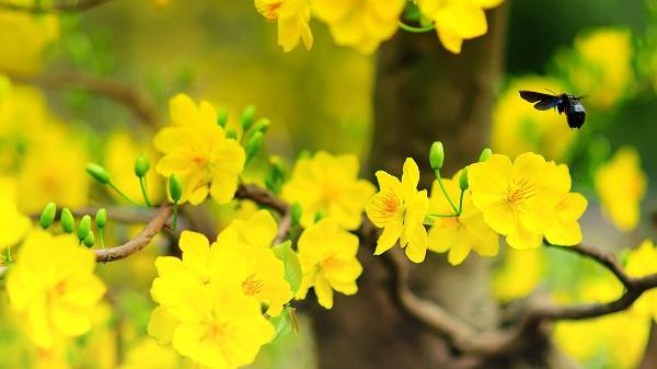 Cảm xúc của em về mùa xuân – Văn hay lớp 3