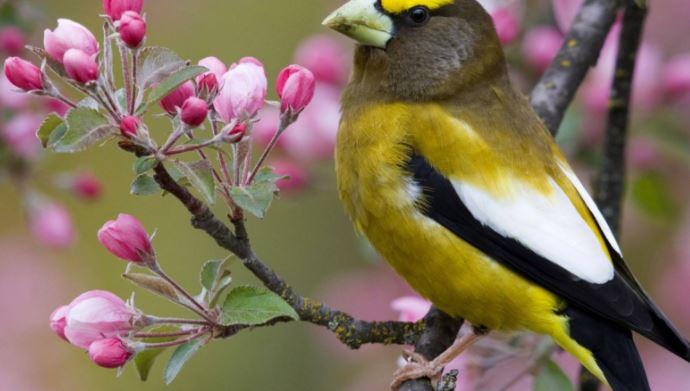 Phân tích bài thơ Mùa Xuân Nho Nhỏ của nhà thơ Thanh Hải rất hay