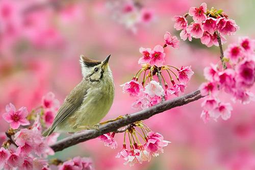 auto draft 8 - Em hãy nêu cảm nhận của mình về mùa xuân