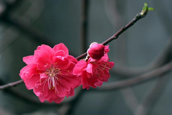 Biểu cảm về mùa xuân trên quê hương